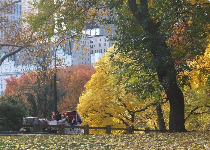 central Park Greeting Card featuring the photograph Country Ride In The City by Barbara McDevitt