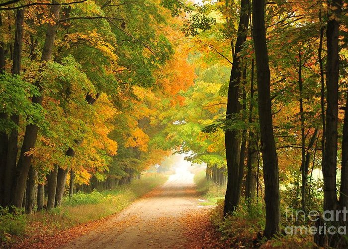Autumn Greeting Card featuring the photograph Country Road In Autumn by Terri Gostola