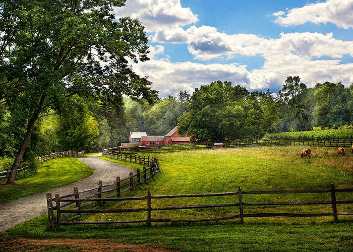 Cow Greeting Card featuring the photograph Country - The Pasture by Mike Savad