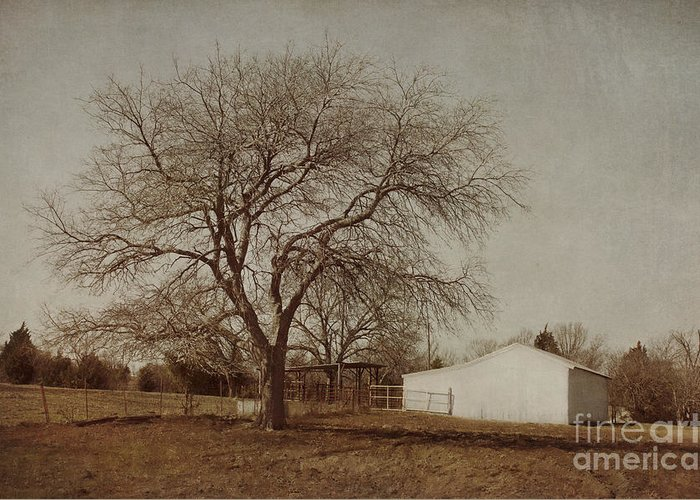 Countryside Greeting Card featuring the photograph Countryside by Elena Nosyreva