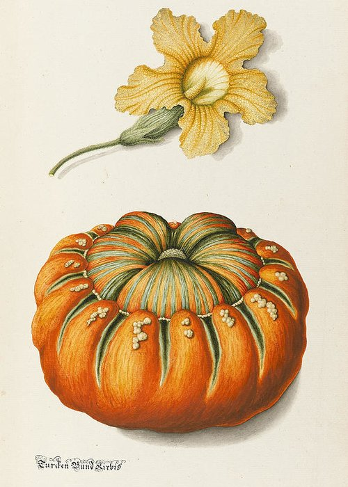 Botanical Greeting Card featuring the drawing Courgette And A Pumpkin by Joseph Jacob Plenck