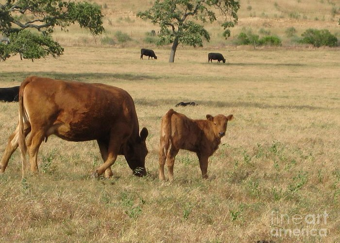 Animals Greeting Card featuring the photograph Cows In The Pasture by Maureen J Haldeman