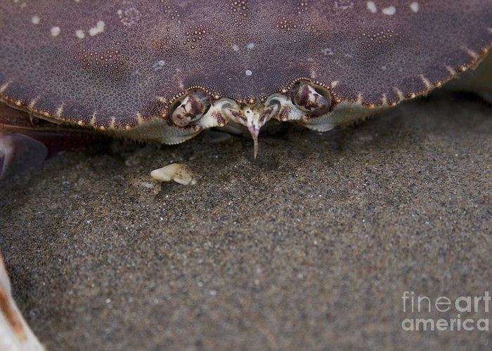 Crab Greeting Card featuring the photograph Crab by Brad Graves
