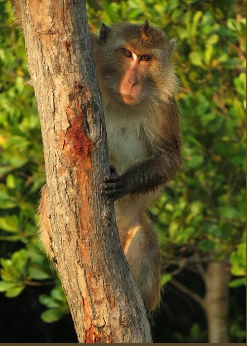 Monkey Greeting Card featuring the photograph Crab Eating Macaque by Ramona Johnston