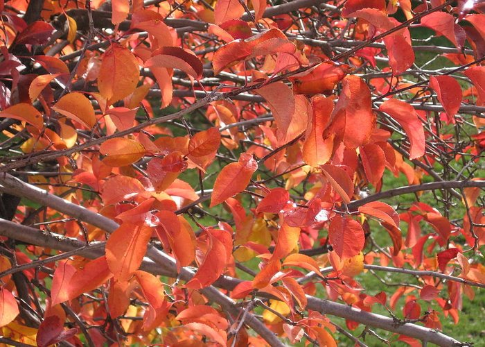 Fall Greeting Card featuring the photograph Crabapple by Kimberly Maxwell Grantier
