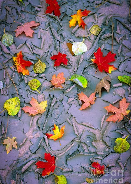 America Greeting Card featuring the photograph Cracked Mud And Leaves by Inge Johnsson