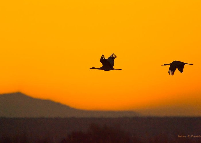 Cranes Greeting Card featuring the photograph Cranes In Flight At Sunset by Mike Dodak