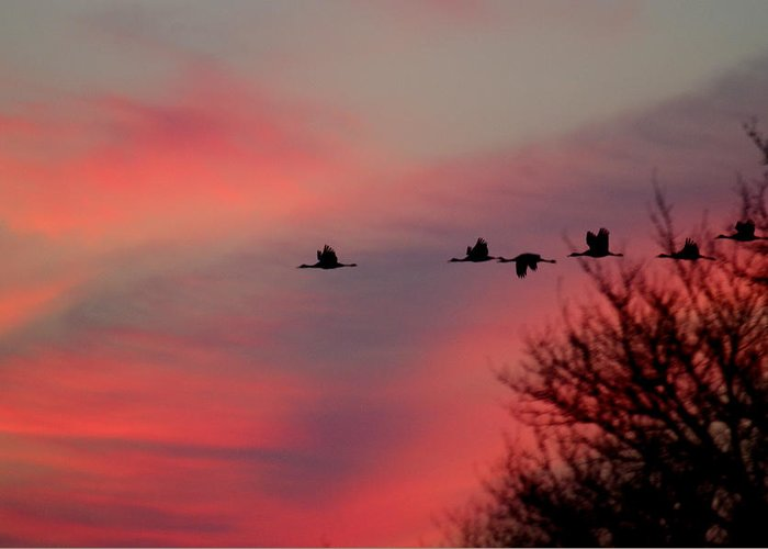 Greeting Card featuring the photograph Cranes On A Dusky Sky by Joe Wicks