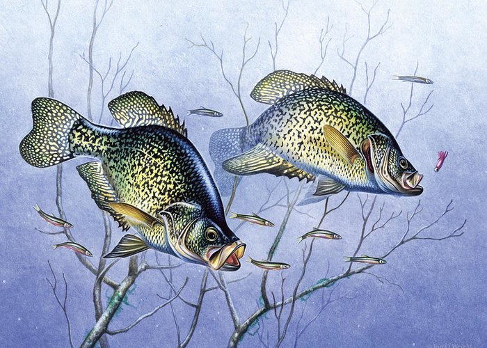 Crappies Greeting Cards
