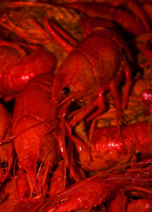 Crawfish Greeting Card featuring the photograph Crawfish by William Tegtmeyer