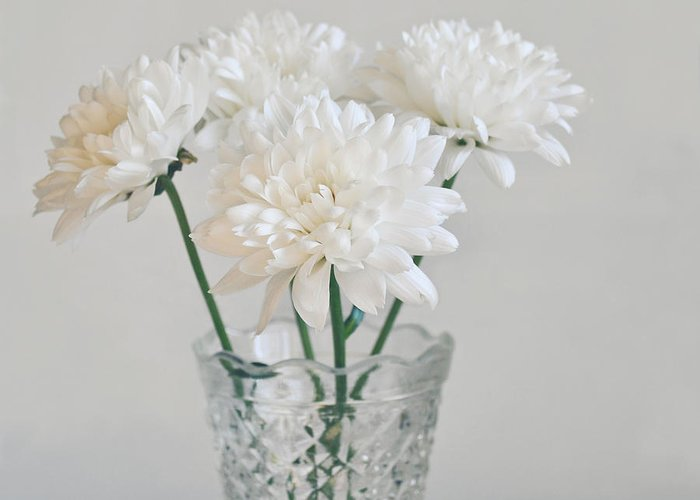 Chrysanthemums Greeting Card featuring the photograph Creamy White Flowers In Tall Vase by Lyn Randle