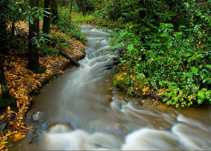North Carolina Greeting Card featuring the photograph Creek After Big Storm by Frank Tozier