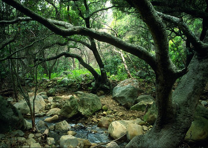 Landscape Greeting Card featuring the photograph Creek In Woods by Kathy Yates