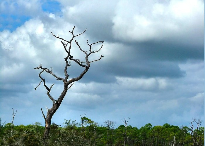 Tree Greeting Card featuring the photograph Crooked Tree On Crooked Island by Julie Dant