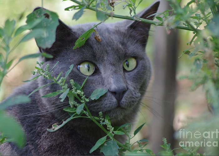 Cat Greeting Card featuring the photograph Cross Eyed Cat by Chrisna Louw