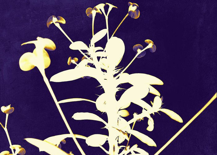 Crown Of Thorns Greeting Card featuring the photograph Crown Of Thorns - Indigo by Shawna Rowe