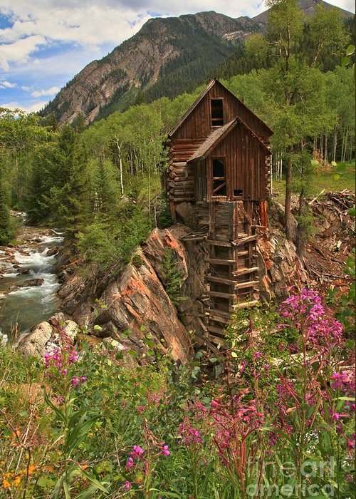 Crystal Colorado Greeting Card featuring the photograph Crystal Mill Wildflowers by Adam Jewell