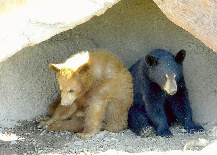 Bear Cubs Greeting Card featuring the photograph Cubs In A Pod by Kim Petitt