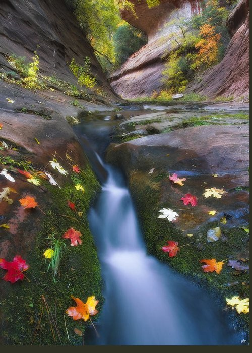 Oak Creek Canyon Greeting Card featuring the photograph Cut Into Autumn by Peter Coskun