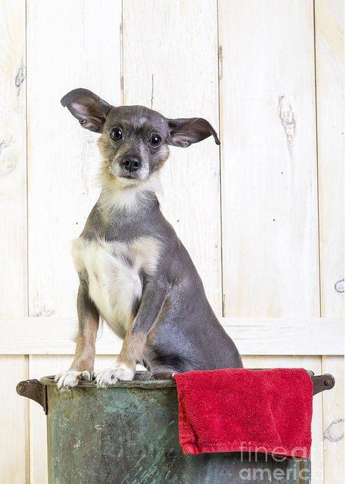 Dog Greeting Card featuring the photograph Cute Dog Washtub by Edward Fielding
