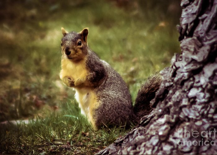Squirrel Greeting Card featuring the photograph Cute Squirrel by Robert Bales