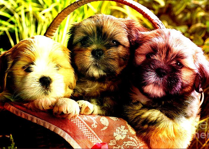 Puppies Greeting Card featuring the mixed media Cute Terrier Puppies by Marvin Blaine