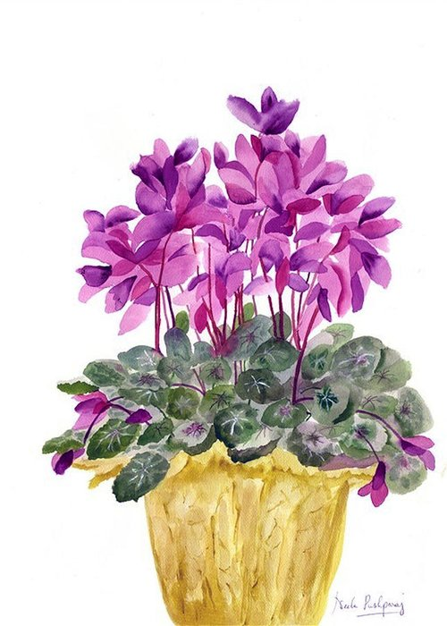 Cyclamen Greeting Cards