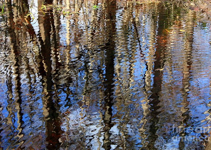 Nature Abstract Greeting Card featuring the photograph Cypress Reflection Nature Abstract by Carol Groenen