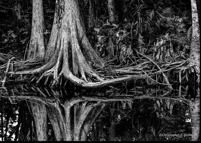 Christopher Holmes Photography Greeting Card featuring the photograph Cypress Roots - Bw by Christopher Holmes