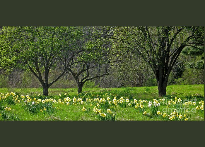 Spring Greeting Card featuring the photograph Daffodil Meadow by Ann Horn