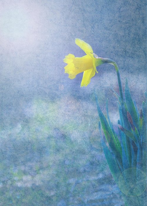 Daffodil Greeting Card featuring the photograph Daffodil by Victoria Winningham