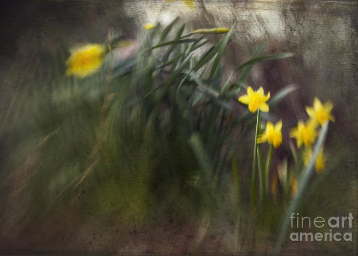 Greeting Card featuring the photograph Daffodills by Angel Ciesniarska