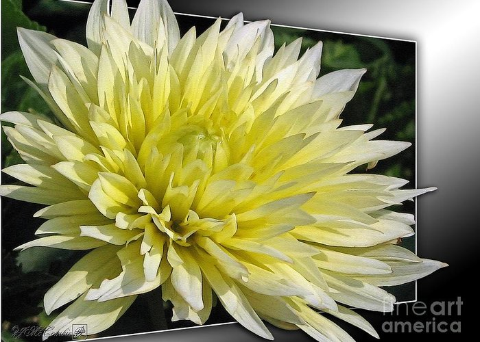 Dahlia Greeting Card featuring the painting Dahlia Named Canary Fubuki by J McCombie
