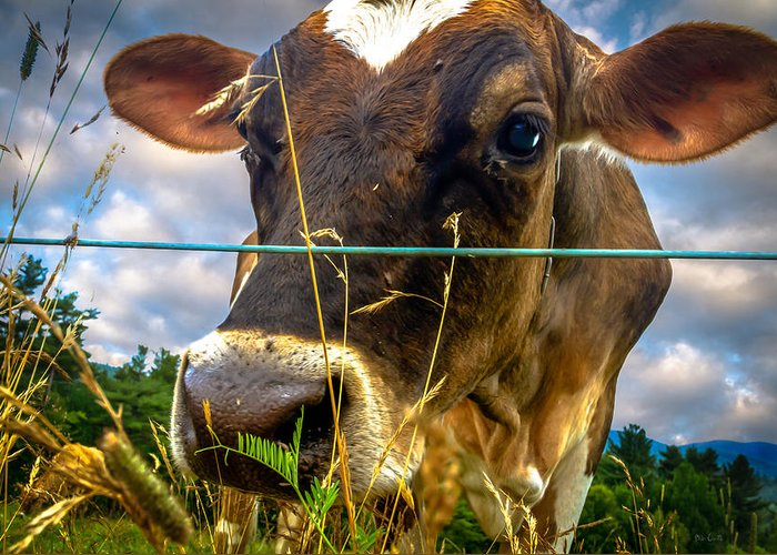 Cow Greeting Card featuring the photograph Dairy Cow by Bob Orsillo