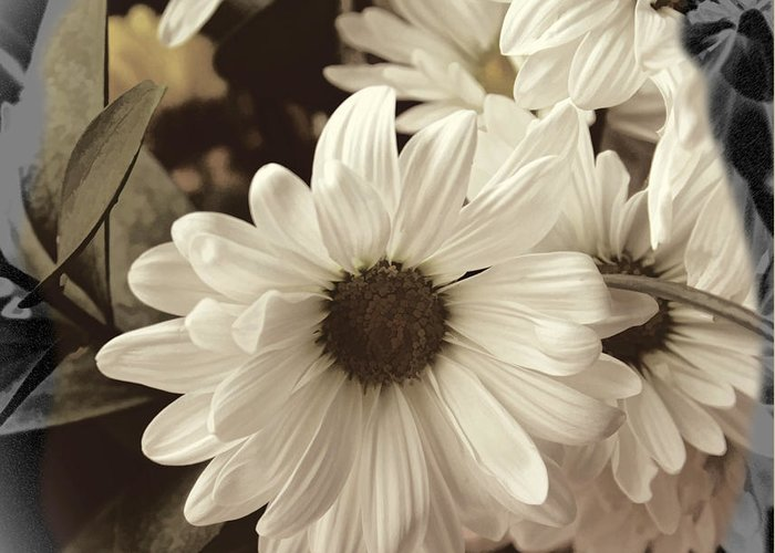 Daisies Greeting Card featuring the photograph Daisies And Charcoal by Bonnie Willis