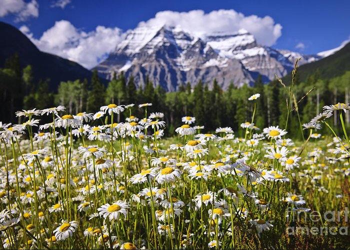 Daisies Greeting Card featuring the photograph Daisies At Mount Robson by Elena Elisseeva
