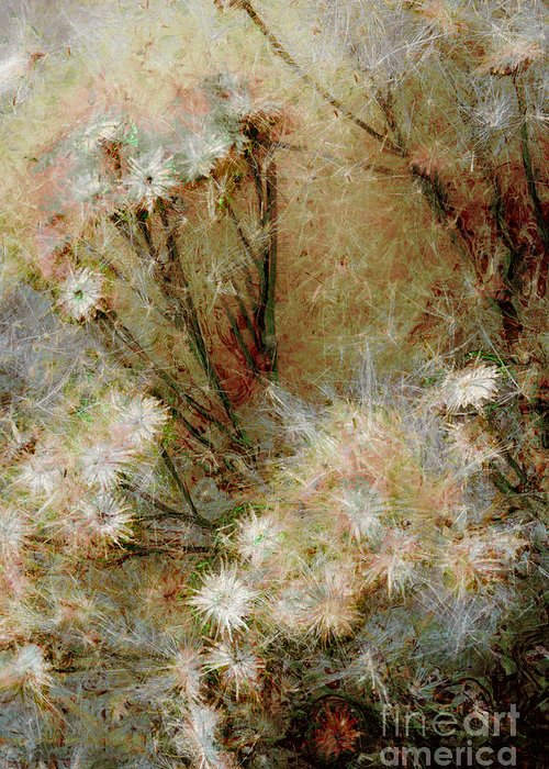 Daisy Greeting Card featuring the photograph Daisy A Day 22 by Julie Lueders