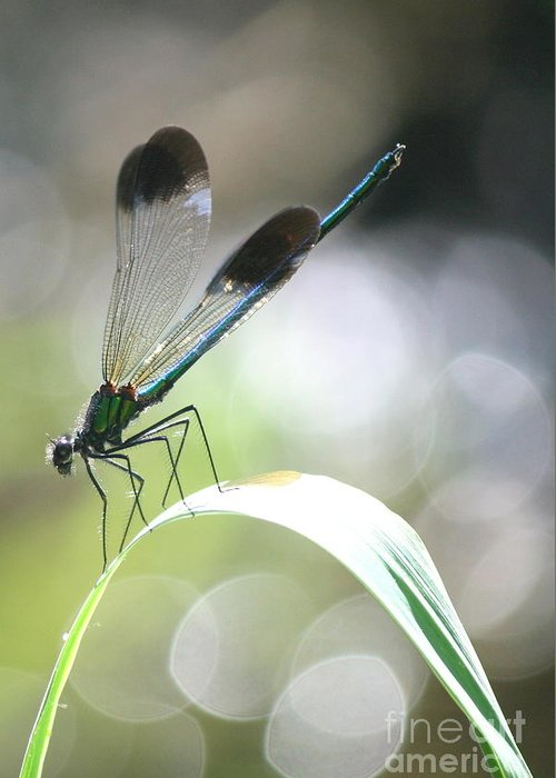 Damselfly Greeting Card featuring the photograph Damselfly On Little River by Neal Eslinger