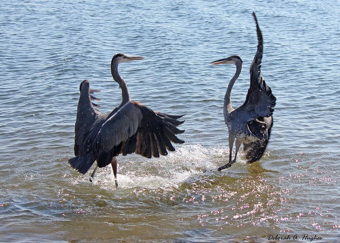 Herons Greeting Card featuring the photograph Dance by Deborah Hughes