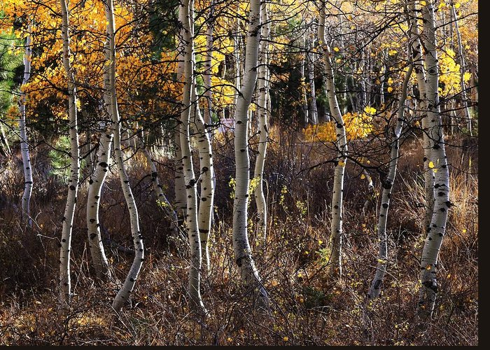 Abstract Greeting Card featuring the photograph Dancing Aspens by Mark Robert Bein