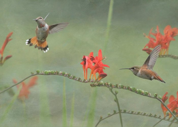 Hummingbird Greeting Card featuring the photograph Dancing In The Flowers by Angie Vogel