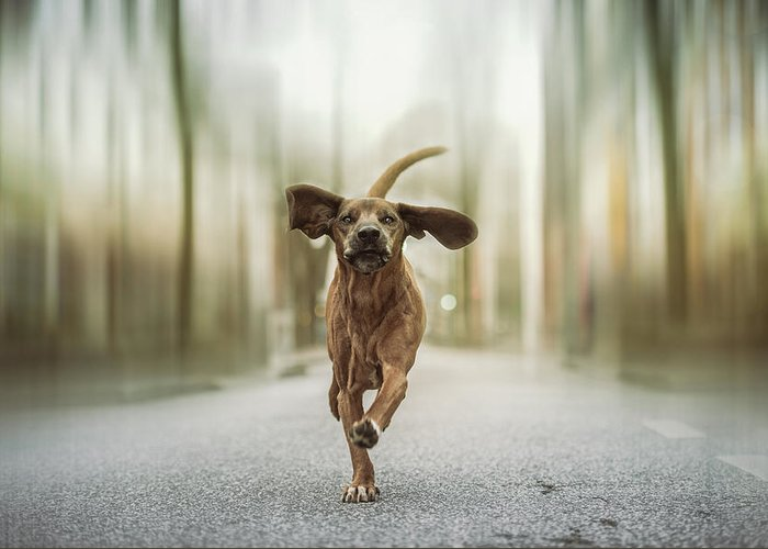 Dogs Greeting Card featuring the photograph Dancing In The Streets by Heike Willers