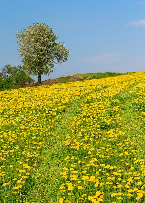Agriculture Greeting Card featuring the photograph Dandelion Meadow And Alone Tree by Jaroslav Frank