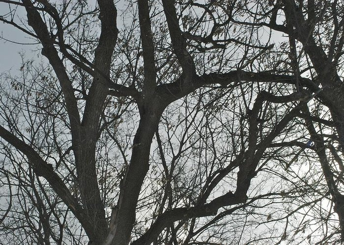 Trees Greeting Card featuring the photograph Dark And Deep by Joseph Yarbrough