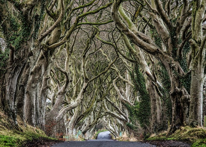 Dark Hedges Greeting Card featuring the photograph Dark Hedges by Nigel R Bell