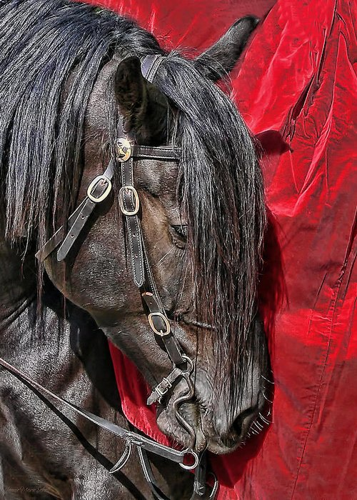 Horse Greeting Card featuring the photograph Dark Horse Against Red Dress by Jennie Marie Schell