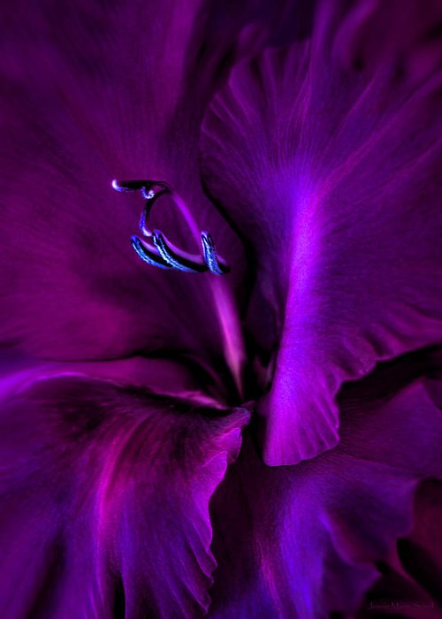 Gladiola Greeting Card featuring the photograph Dark Knight Purple Gladiola Flower by Jennie Marie Schell