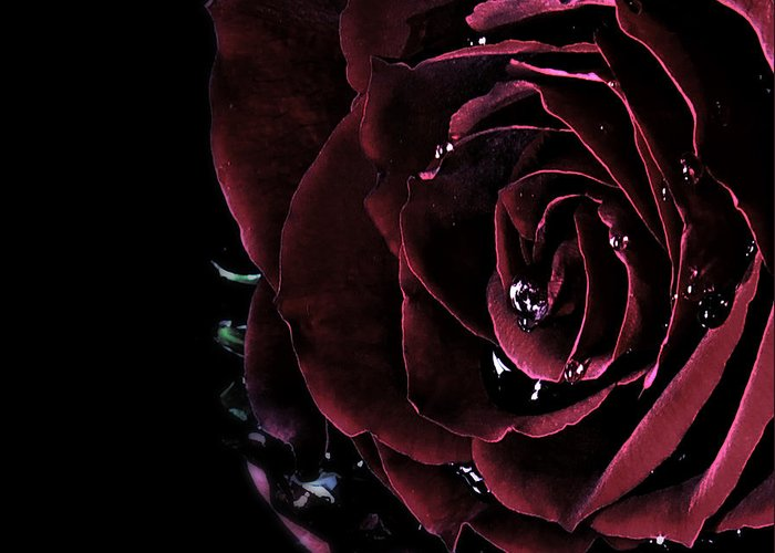 Roses Greeting Card featuring the photograph Dark Rose 2 by Ann-Charlotte Fjaerevik