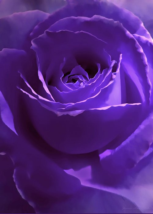 Rose Greeting Card featuring the photograph Dark Secrets Purple Rose by Jennie Marie Schell