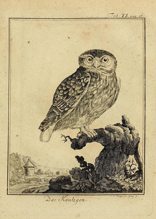 Owl Greeting Card featuring the drawing Das Kautzgen by Philip Ralley